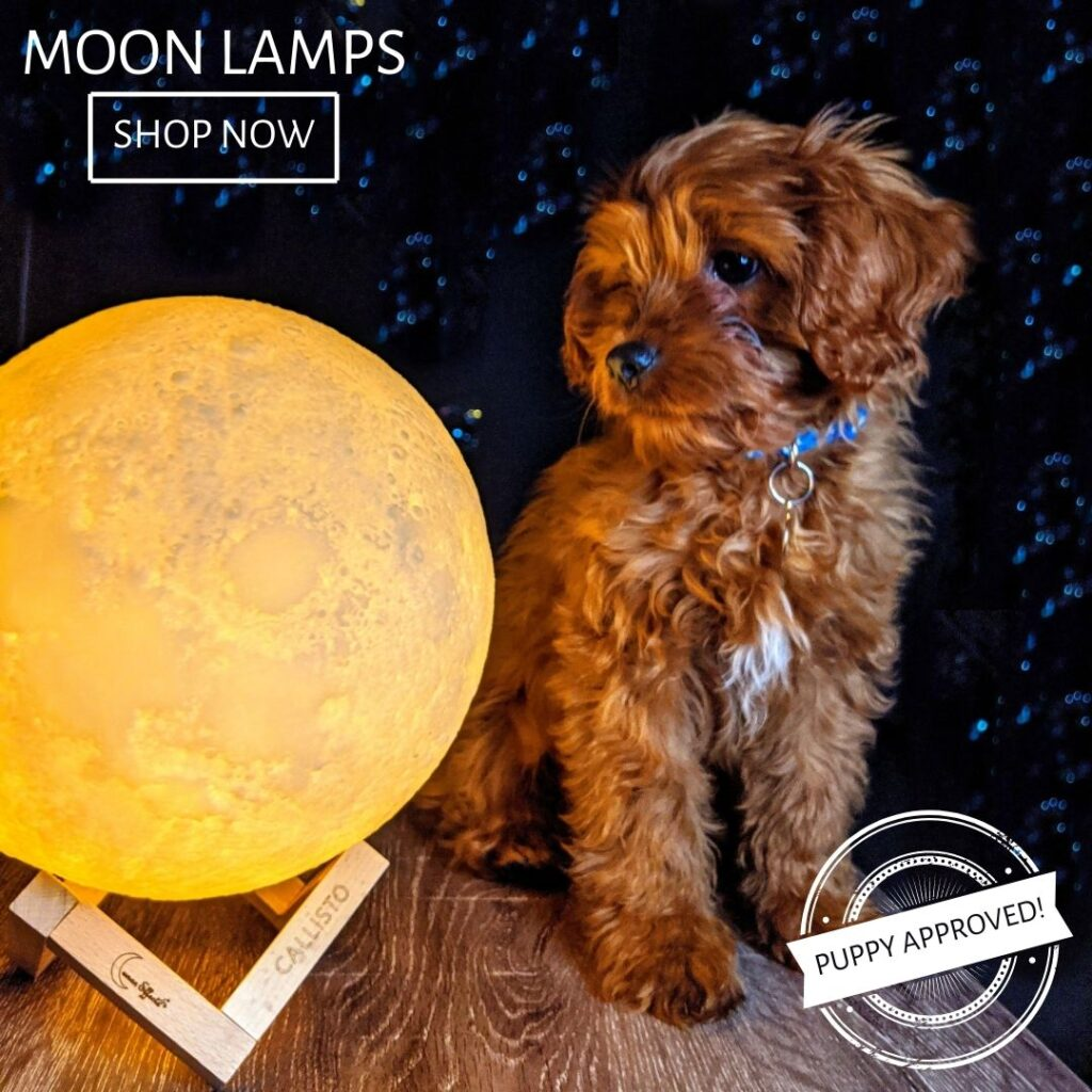 Moon Lamp with Puppy
